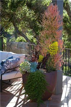 Succulent Container  Container Gardens  Grace Design Associates  Santa Barbara, CA