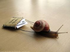 Send snail mail! this blog shows many cool things you can send in the mail!