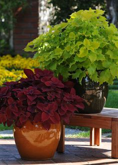 Coleus offers bright foliage that thrives in filtered light and shade. Give these easy-to-grow annuals a try this season. Learn more about coleus at The Home Depot's Garden Club.