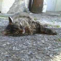 #tantocaldo :-)  #Tony si è già messo avanti con la #nanna ♡  Dolci Sogni a-mici !  #Buonanotte e #buonweekend a tutti :-)    #Goodnight #Sleeptime #sleep #weekend #happyweekend  #catsofinstagram #cats #instacat #cutecats #sweetcats #lovelovelove #lovecat @animals_captures #animal_captures @_RSA_Nature #RSA_nature #cats #pets #animals #photooftheday #ilovemycat #nature #catoftheday #lovecats   #catsmylove  #gatti #ioamoglianimali #MIAO :-)