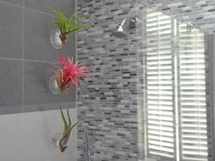 plants for bathrooms tilandsia air plant modern bathroom decorating ideas