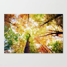 #society6 #art #canvas #print #nature #trees #Colors #decor #decoration #colorful #beautiful #shop #shopping