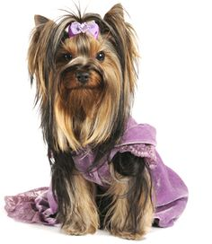 Pampered Puppy | pampered pups a pampered pup is a loved pup love her right and treat ...