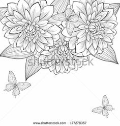 dahlia drawings | beautiful monochrome black and white background with frame of dahlia ...