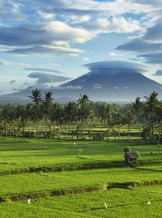 The landscape of Ubud in Bali
