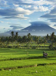 The landscape of Ubud in Bali