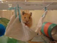 Homemade Hammock - Page 3 - Hamster Central - paper towel and ribbon!