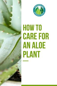Aloe plants are some of the easiest houseplants to care for, and they're useful too! Here's how to care for an aloe plant and harvest the gel inside. Types Of Houseplants, Types Of Plants, House Plant Care, House Plants, Fiddle Leaf Fig Tree, Pool Installation, Aloe Leaf, Growing Succulents, Above Ground Swimming Pools