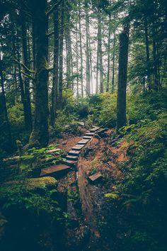 Forest Path, British Columbia, Canada photo via meghan