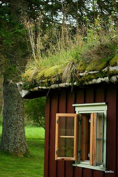 Norwegian birchbark and sod roof. Here you can clearly see the base layer of birch bark which waterproofs and insulates the house. The layer of sod is what truly protects the home from the extreme temperatures of cold winters and the heat of the summers as well.