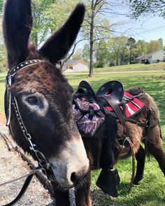 "Donkey Listener on Instagram: ""I love him like crazy 🥰🥰 we got off the farm today for a ride on Eureka Trail. Perfect day🌼 There was a whole group of bicycle peeps…"" Horseback Riding Trails, I Love Him, My Love, Like Crazy, Got Off, Donkey, Peeps, Bicycle, Horses"