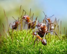 Ant Tales By Andrey Pavlov | English Russia