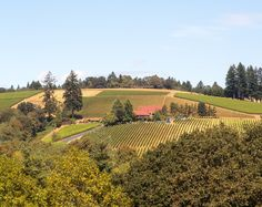 The Oregon Wine Country