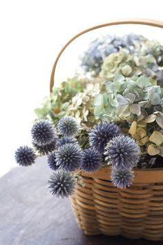 Dried Hydrangea flower arrangement in a basket Love Flowers, Fresh Flowers, Dried Flowers, Beautiful Flowers, Wedding Flowers, Wedding Colors, Pot Pourri, Flower Basket, Colorful Pictures