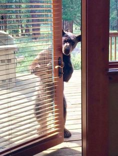 """Bear: """"Excuse me I did knock! I was told you had some food for me..."""""""