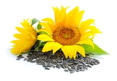 Sonnenblumenkerne Heilkraft