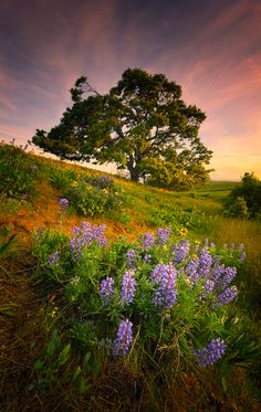 Columbia Hills State Park by Deb Harder, via 500px