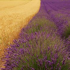 Provence in the summer.
