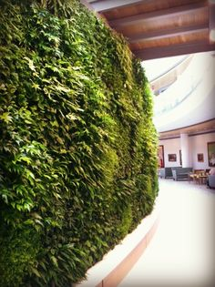 Explore this photo gallery of the living green wall Ambius designed and installed in the lobby of the Lancaster General Ann B. Living Green Wall, Vertical Gardens, Green Walls, Go Green, Lancaster, Health Care, Photo Galleries, Healing, Urban