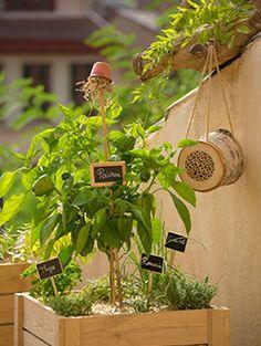 Des solutions faciles et adaptées Botanic® vous propose des solutions adaptées aux petits espaces pour cultiver ses aromates.