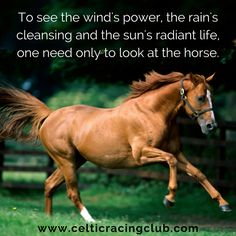 Celtic Racing Club: The Thrill of Horse Racing & Racehorse Ownership Racehorse, Wind Power, Horse Racing, Great Britain, Did You Know, Celtic, Transportation, Horses, Club