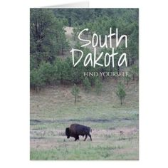 South Dakota where the buffalo run, home of Mt. Rushmore, Custer, Crazy Horse and a great state to go camping.