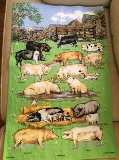 Vtg Lamont Tea Kitchen Towel Pig Breeds 1895 Farm Green Cotton United Kingdom  #Lamont