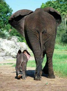 Baby elephant Jabali and mom Vasha at Disney's Animal Kingdom in Florida. - photo by the Elephant Team at Disney Disney Animal Kingdom, Elephants Never Forget, Save The Elephants, Baby Elephants, Wild Life, Cute Baby Animals, Animals And Pets, Zoo Animals, Wild Animals