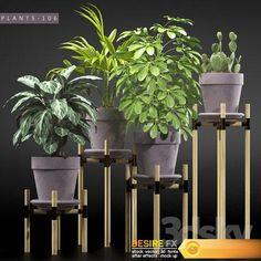 PLANTS 106 3D Model    #PLANTS  #3D_Model #3DModel    http://www.desirefx.me/plants-106-3d-model/