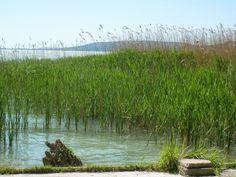 Lombház: Balaton-part Hungary, Mountains, Nature, Travel, Voyage, Viajes, Traveling, The Great Outdoors, Trips