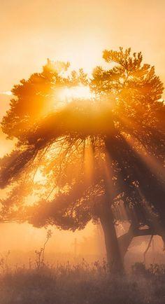 Nature HD Widescreen Wallpapers | Morning Sun Nature wallpaper  http://www.freecomputerdesktopwallpaper.com/Morning_Sun_Nature_Wallpapers_freecomputerdesktopwallpaper.shtml