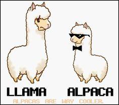 """'""""Alpacas are Way Cooler"""" Llama vs. Alpaca' by ahoytisnet Alpaca Vs Llama, Alpaca Cartoon, Cartoon Llama, Alpaca Funny, Cute Alpaca, Baby Alpaca, Llama Llama, Funny Llama, Alpacas"""
