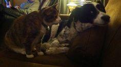 Diese Haustiere wissen einfach nicht, was Privatsphäre ist. - funcloud.com