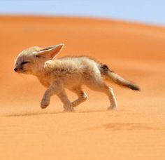 Cute fox-if you have read a book called skippy jon jones this fox looks like him