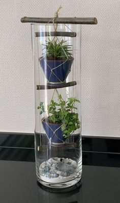 Groen in hoge vaas met schelpen decoratie. Green in a tall vase with shell decoration. Succulent Terrarium, Succulents Garden, Indoor Garden, Indoor Plants, Shell Decorations, Deco Nature, Decoration Plante, House Plants Decor, Deco Floral