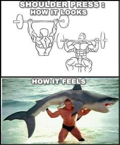 Putting a shark back on a weight rack would be a bitch