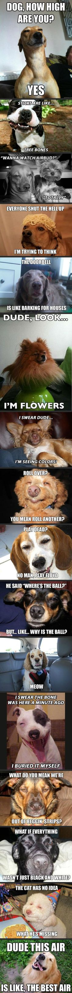 "Hahahahahaha omg. ""Roll over? You mean roll another?"" Looks just like a blonde lulu!!!!"