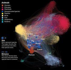 Diagram captures microbes' influence across animal kingdom | Science News