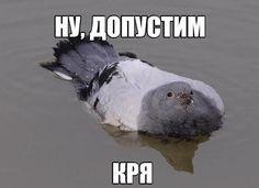 #картинки Мемы в пятницу.