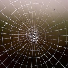 """""""We are like the spider.  We weave our life and  then move along in it.  We are like the dreamer  who dreams and then  lives in the dream.  This is true for  the entire universe.""""    —The Upanishads"""