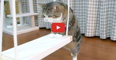Maru the Cat Discovers a Swing !!