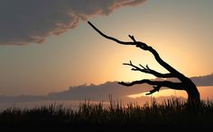 Silhouette - Original fine art landscape photography by Bob Orsillo.  Copyright (c)Bob Orsillo / http://orsillo.com - All Rights Reserved.   Old tree bent from years of wind and weather enjoying a peaceful sunset in a field of wild grass. Photography by Bob Orsillo