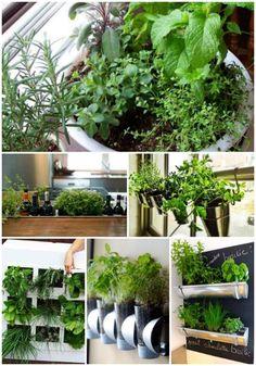 18 Best Ways To Grow Food Indoors