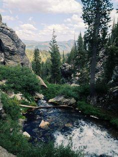"Beautiful forestry scene at Lassen Park- ""Taylor Mccutchan""."