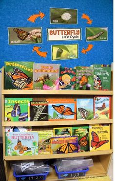 Butterfly life cycle activities, lab ideas, and FREE printable bulletin board set.