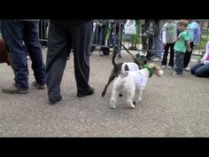 PET PARADE | Trustmark Children's Festival at the 2010 Mal's St. Paddy's Parade and Festival | http://newsocracy.tv