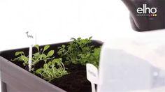 grow your own with the elho green basics grow table & house xxl