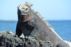 Wildlife Adventures in the Galapagos Islands: The Land Before Time, by Shelley Seale for Trading Places