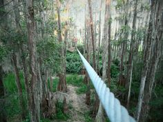 Love Note #16: Tallahassee Museum  Zip line at the museum! There is a long and short route.