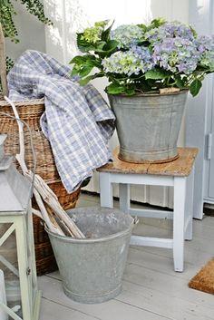 Hydrangeas in a zinc bucket - wonderful combination of colour & texture